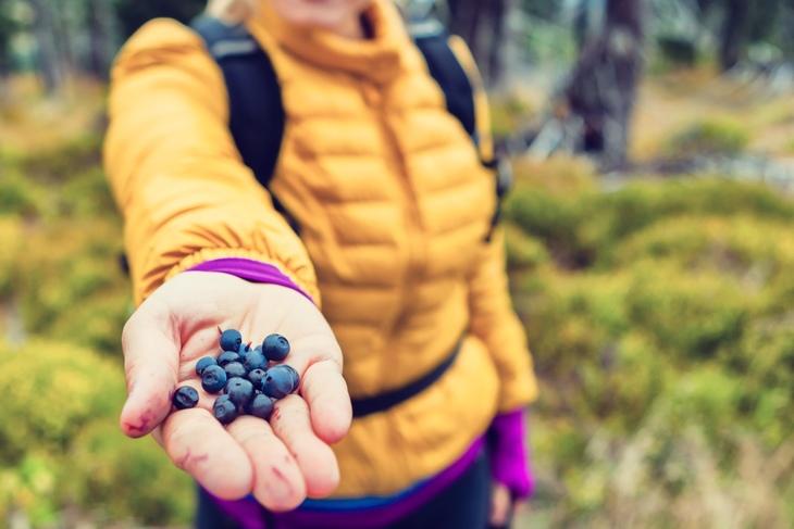 blåbær i hånd