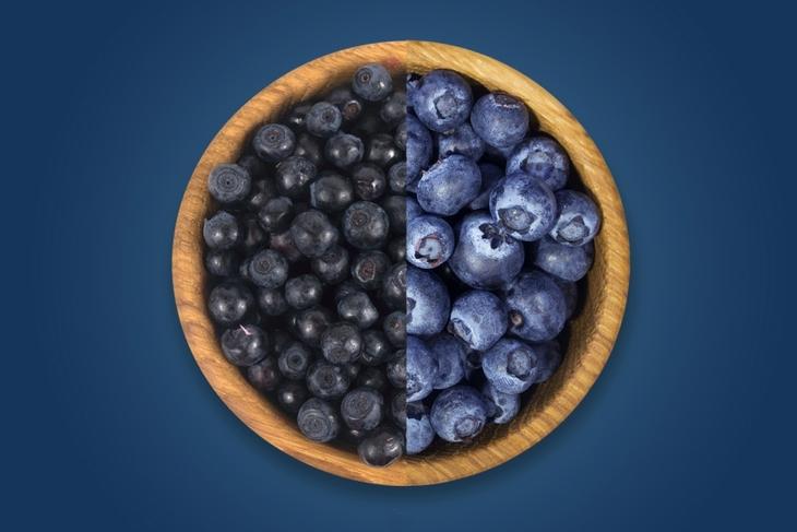 forskjellige blåbær
